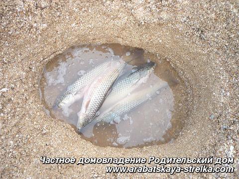 Отдых на Азовском море с детьми в Кучугурах по доступным